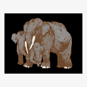 forest_encounters_elephants_brown